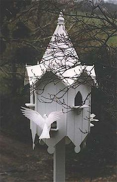 "Working on getting some ""white doves"" for wedding and funeral releases.  so beautiful!"