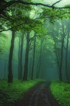 packlight-travelfar:  (via 500px / Secrecy of transformation by Janek Sedlar)