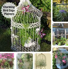 DIY Birdcage Planter   The WHOot