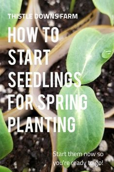 Learn this method for starting seeds indoors so they are ready to go for spring planting! Also learn what can be planted directly outside in colder weather. Starting Vegetable Seeds, Starting Seeds Indoors, Seed Starting, Gardening Zones, Gardening Tips, Indoor Gardening, Spring Plants, Spring Garden, Planting Seeds Quotes