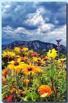 Beautiful flowers, beautiful mountain view, beautiful nature.