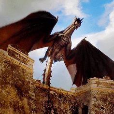 thirat atthiraride — bericdondarrion: My reign has just begun. Drogon Game Of Thrones, Game Of Thrones Dragons, Got Dragons, Game Of Thrones Art, Fantasy Creatures, Mythical Creatures, The Mother Of Dragons, Game Of Trones, My Champion