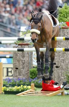 funny jumping horse