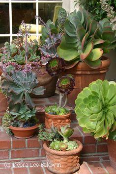 Front Porch Ideas - Gardening Gone Wild