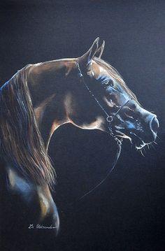 Capturing the splendor of the Arabian horse
