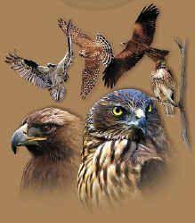 raptors of north america