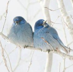 Birds of a Feather. Birds of Paradise blue bird of paradise Bird of paradise Bird of paradise Pretty Birds, Love Birds, Beautiful Birds, Animals Beautiful, Cute Animals, Pretty Animals, Beautiful Couple, Animals Amazing, Beautiful Scenery