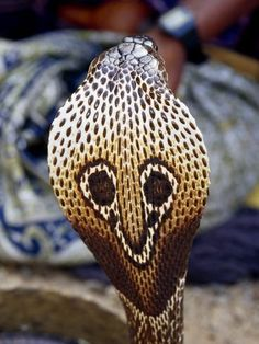 Snakes - Amrit Bhogal