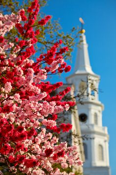 Spring blooms and Saint Michael's steeple, Charleston, SC  © Doug Hickok