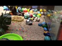 These hermit crabs were painted to be sold as toys in the mall. http://FreeAnimalVideo.org protested this practice (with the help of Mohr Publicity) and the mall removed the crabs. Now this vendor only sells puzzles, guitars and other children's toys.