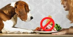 10 human foods that are harmful to dogs #doghealth #dogfood #dogs #doglifestyle