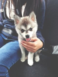 I want a husky !!! My first pet when I move out.... Only because a horse is a bit pricey at first....