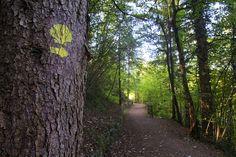 Cammino Jacopeo d'Anaunia #miravaldinon  #valdinon #trentino