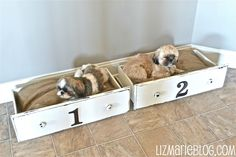 Reclaimed+Dresser+Drawers+Turned+Doggie+Beds