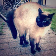 Sprot Kat | Pawshake Drongen