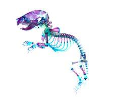 100524_06_transparent-specimen