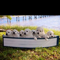 """""""I can't believe I'm about to say this for real in my life, but here goes. Guys, we're gonna need a bigger boat."""""""