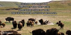 The power of our ancestors drives us all. #Knowledge #Native #Wisdom #Quote Partnership with Native Americans (PWNA)