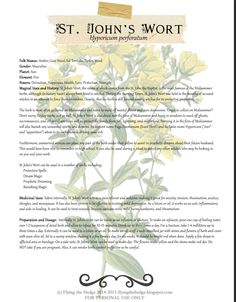 Magical and medicinal uses of St. Johns Wort