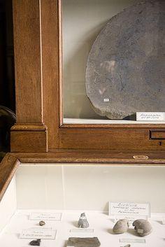 Fossil Room | Flickr - Photo Sharing!