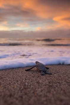 Baby sea turtle turtle love pinterest water waves an image on imgfave publicscrutiny Image collections