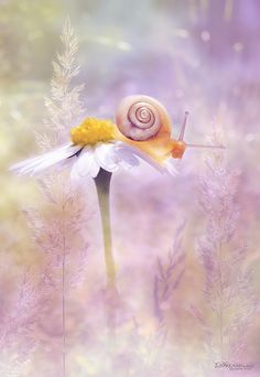 Snail on a daisy Daisy, Bokeh Photography, Tier Fotos, Photos, Pictures, Belle Photo, Pink Flowers, Cute Animals, Creatures