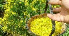 Το Φυσικό Γιατρικό Που Κάνει Πάταγο Παγκοσμίως! Home Remedies, Natural Remedies, Fruits And Veggies, Vegetables, Holistic Medicine, Alternative Treatments, Healing Herbs, Natural Cosmetics, Food Art