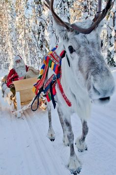 Pin 14) Jimmy is headed home for the Winter break ....Christmas is around the corner and that mean gifts! ...Jimmy knows what he wants to ask his parents for this Christmas