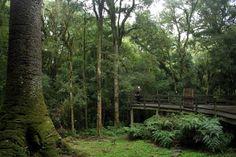 Parque do Pinheiro Grosso, em Canela (foto: Eduardo Vessoni)