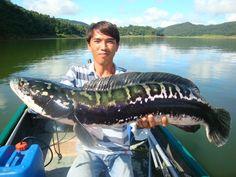 Snake head fish...mean...bus soo pretty