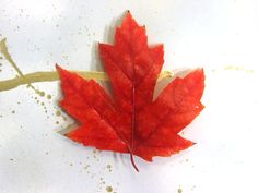 Perfectly preserve autumn leaves! Easy and cheap DIY to maintain their vibrancy. :D