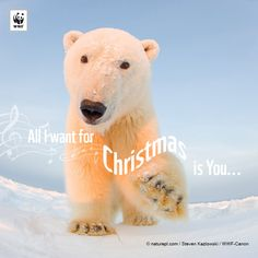 All I want for Christmas is you!   A better way to give: http://pand.as/1GfmvoO