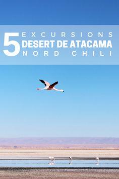 Visiter le désert de San Pedro de Atacama, nord du Chili
