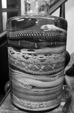 Snakes from the dollar store put in a glass jar.. add water (food coloring if wanted)