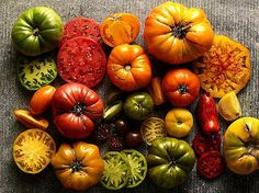 Giant Heirloom Tomato Collection 175 seeds Paul by SmartSeeds