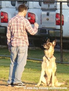 Training German Shepherd dogs will become easy and fun if you follow this free online obedience training guide. Learn puppy training, basic commands and advance work to teach your GSD.
