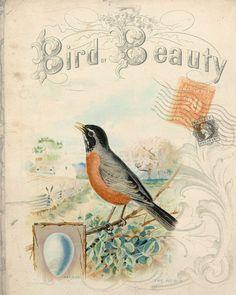 Botanical Print  Bird Beauty Robin