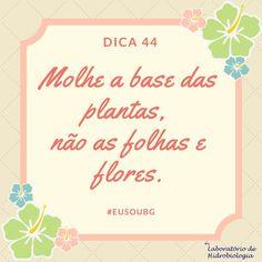 Além de evitar doenças para as plantas essa prática diminui o gasto desnecessário de água uma vez que não haveria aproveitamento desse recurso por parte de folhas e flores. #baiadeguanabara #labhidroufrj #ufrj #riodejaneiro #errejota #agua #analisedeagua
