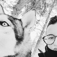 Si vous saviez comme j'aimerais revivre ce voyage en Laponie et la rencontre avec ces huskies si beaux et si affectueux  J'en aurais presque pleuré d'émotion !  . #laponie #girlstriplaponie #jettours #jettourslaponie #visitfinland #travel #huskies #chien #dog #loveanimal #finland #laponia #voyage #nature #animals #lapland #neige #snow #winter #travelgram #instatravel #travelblogger #nb #europe #explore #picoftheday #photoofday #musher