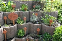 Designing Herb Gardens 21 Ideas for Large and Small Gardens Part 9 Herb Garden Made from Plant Rings Fantastic Back and Front Yard Landscape Designs Most amateur front yard landscape designs include s Herb Garden Design, Small Garden Design, Diy Garden, Garden Care, Garden Crafts, Garden Projects, Plantar Mango, Small Gardens, Outdoor Gardens