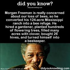 He doesn't wear a beekeeping hat, because he's Morgan Freeman and even angry bees aren't going to mess with that. Description from beautifulbellanotte.tumblr.com. I searched for this on bing.com/images