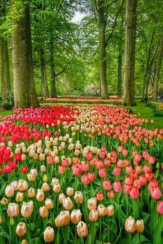 (¯`´¯) *Bom dia!* ¸¸`•.¸.•´ ⁀⋱‿✫  Que Deus nos ouça a cada amanhecer, e nos conceda a graça de viver e sentir a vida , desfrutando de momentos sublimes e precisos. Que ele nos faça entender que problemas se resolvem pela nossa sabedoria, paciência e confiança e que o florescer de cada dia depende muito da nossa vontade de vencer... Que Deus nos conceda um dia de paz! ⁀⋱‿✫  ✍ Cecília Sfalsin