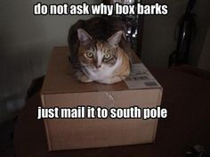 Dakota's box would meow.  Swampy would be nowhere to be seen.