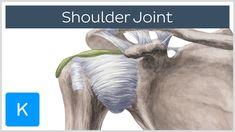 Shoulder Joint - Human Anatomy | Kenhub