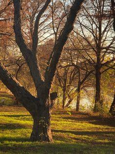 Dec 2019 Trail, Autumn, Landscape, Plants, Fall, Plant, Landscaping, Planting, Planets