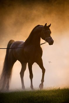 um. this is amazing photography. someday when i get good at horse photography...