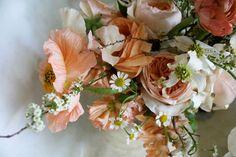 Wedding Ideas: peach-white-daisy-amy-merrick, peach flowers