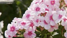 Add Fragrant Flowers to Your Garden