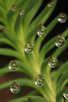 Droplets  #water #water_drops