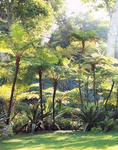 tree Ferns - Art Luna Garden